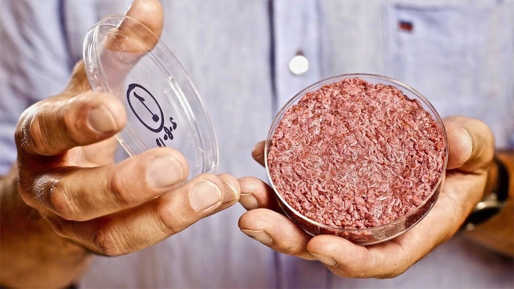 Artificial lab grown meat in Petri dish (YouTube)
