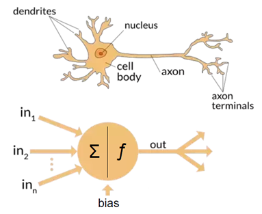 Although similarities nowadays are sparse, Artificial Neural Networks got their name from being modelled after our own biological human neurons.